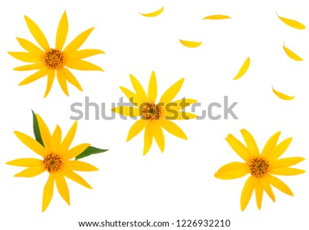 Flowers of Jerusalem artichoke isolated on white, flat lay, top view. #1226932210