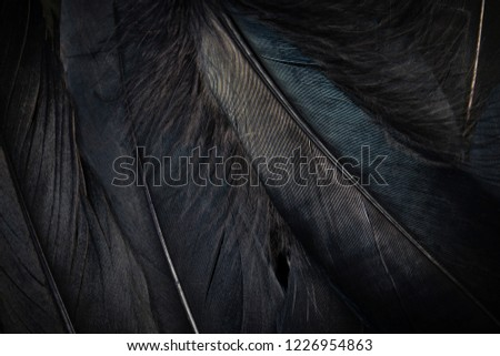 Feather background. Black feather textured background. #1226954863