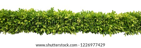Green hedge or Green Leaves Wall on isolated #1226977429