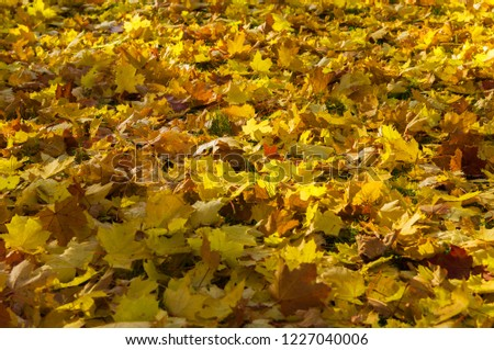 Autumnal colorful carpet with leaves #1227040006