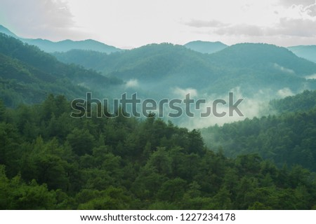 Mountain landscape with forest in the mist background #1227234178