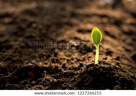 The seedlings are growing from the fertile soil. Royalty-Free Stock Photo #1227266215
