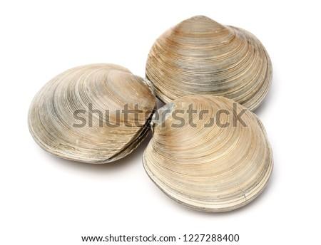 fresh clams on white background #1227288400