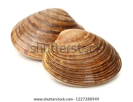 fresh clams on white background #1227288949