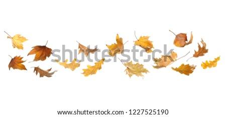 Set of autumn leaves on white background #1227525190