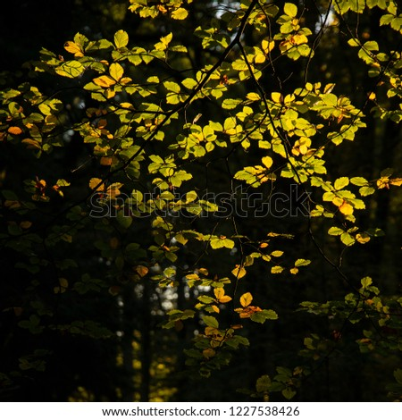 Stunning vibrant Autumn Fall trees in Fall color in New Forest in England with beautiful sunlight making colors pop against dark background #1227538426