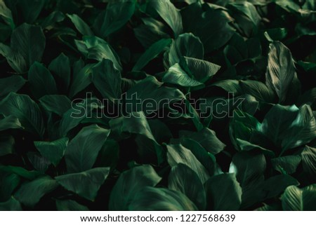 abstract green leafs  #1227568639