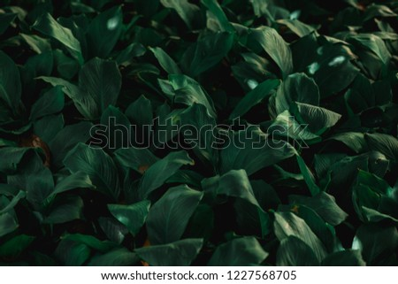 nature background, green leaf  #1227568705