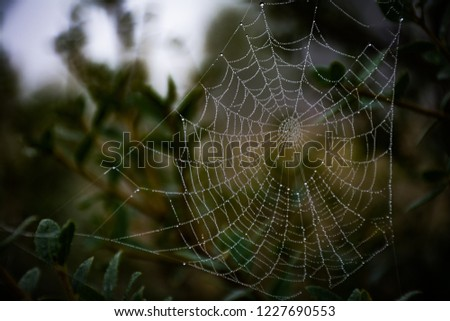 morning dew drops on spider web in bokeh background. Spider web in nature #1227690553