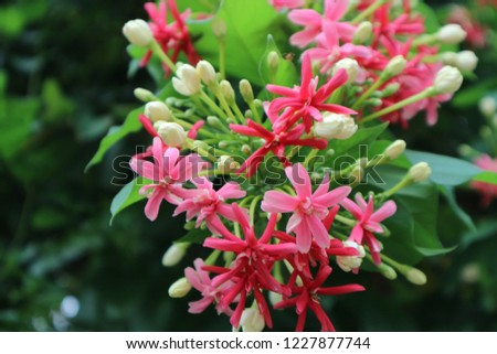 Beautiful pink and white flowers #1227877744