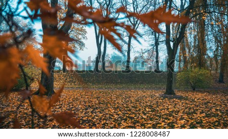 Picture of a small hill and falling leaves taken with a high speed lens and through some branches in late October