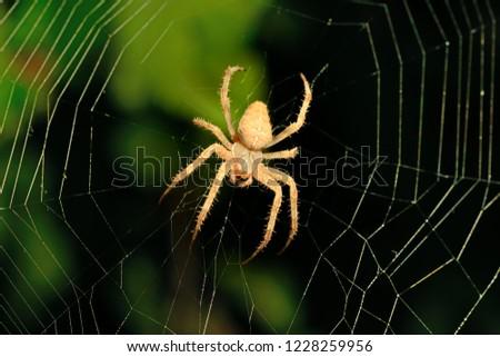 Big brown spider on its web on dark background #1228259956