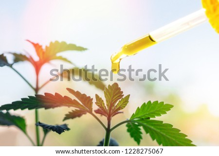 Pipette with Cannabis oil against Marijuana plant #1228275067