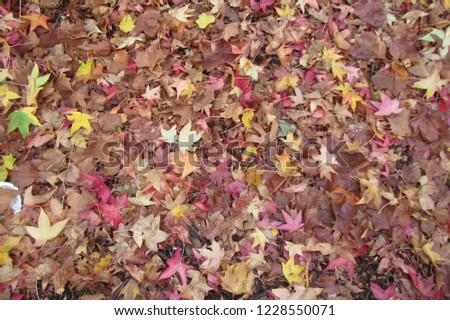 Autumn leaves on the ground #1228550071