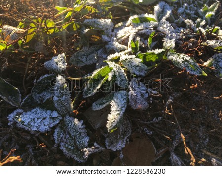 Frost on the leaves. #1228586230