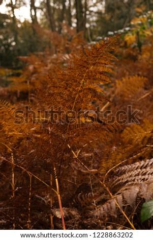 Colourful golden leafed landscape with orange bracken in autumn woodland forest. #1228863202