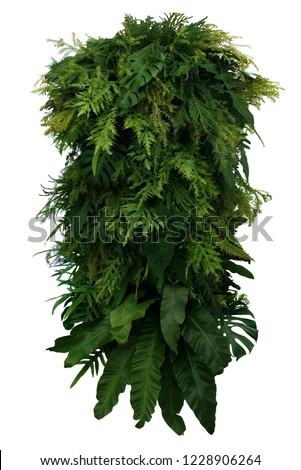 Tropical leaves foliage plant bush floral arrangement, vertical green wall nature backdrop isolated on white background with clipping path. #1228906264