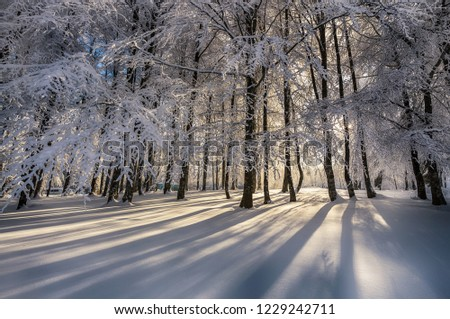 Winter. Wonderful winter landscapes. Trees covered with snow. Everywhere is white. Cold weather.  Beautiful background images. Uludag, Bursa, Istanbul, Turkey.