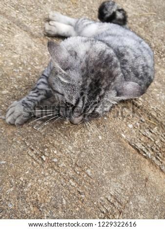 Gray cat lying on the floor #1229322616