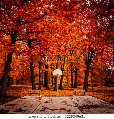 TORONTO PARK WITH BASKETBALL NET IN FALL/AUTUMN - Beautiful, colorful seasonal park setting with basketball net and court. Red and orange fall foliage with fallen leaves. Toronto, Ontario, Canada