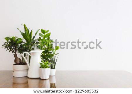 Houseplants in flowerpots on table near white wall  #1229685532