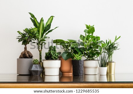 Houseplants in different designed flowerpots on a cabinet Royalty-Free Stock Photo #1229685535