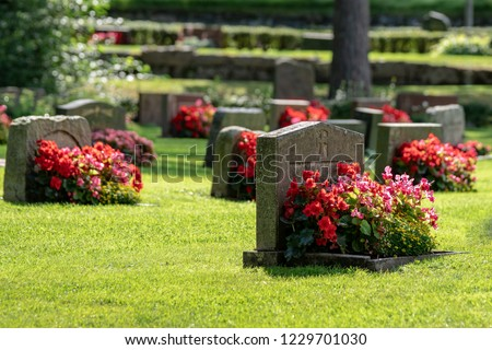 Sun shining on gravestones with red and pink flowers on a beautiful and well cared cemetery in Sweden Royalty-Free Stock Photo #1229701030