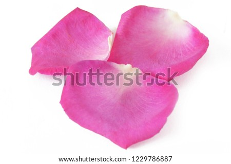 pink rose petals isolated on white background #1229786887
