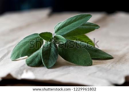 A fresh sage (also called garden sage, common sage, or culinary sage) twig with leaves on a paper background #1229961802