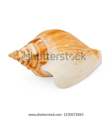 Isolated Multi Colored Single Sea Shell Straight On Angle #1230072865