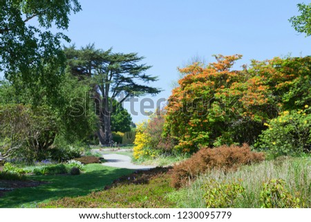 Park with flowering colorful azalea and rhododendron plants, spring flowers, mature trees, on a sunny day . #1230095779
