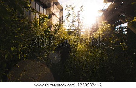 silhouettes of people creeping into the thickets in an abandoned factory Royalty-Free Stock Photo #1230532612