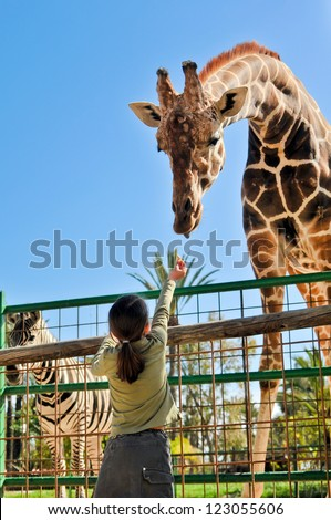 Girl Feeding Giraffe at Zoo Royalty-Free Stock Photo #123055606