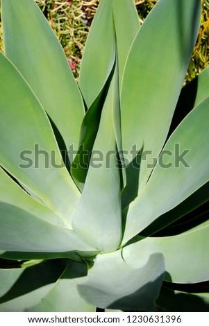 plant, cactus, california #1230631396