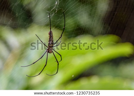 Spidermans with the nature green background