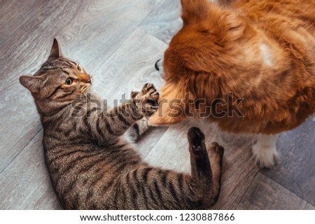 Cat and dog play together. Friendship between animals. Close-up #1230887866