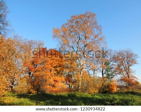 Yellow trees in autumn park #1230934822