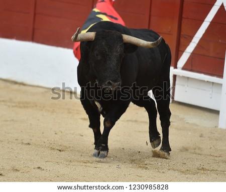 Spanish black bull #1230985828