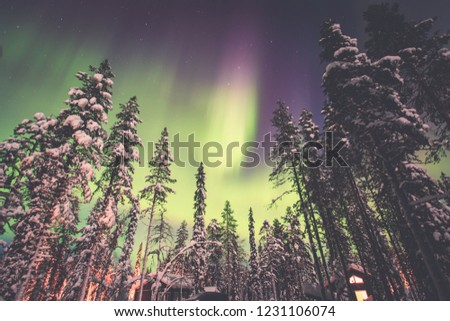 Beautiful night picture of massive multicolored green vibrant Northern Lights, Aurora Borealis, Aurora Polaris in the night sky over winter Lapland landscape, Finland, Scandinavia