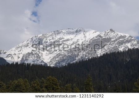 Mountains covered in snow above group of trees. #1231140292
