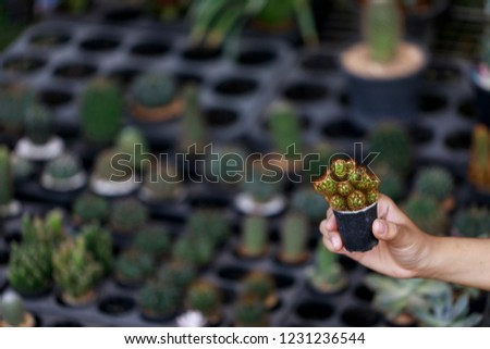 Hand holding cactus pot carefully. #1231236544