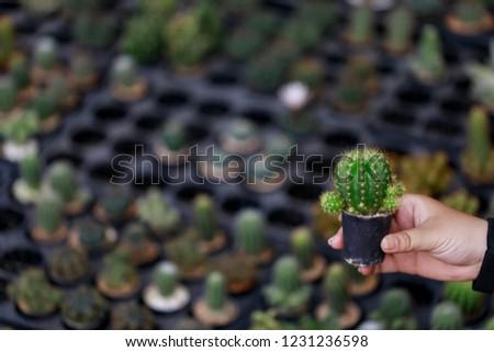Hand holding cactus pot carefully. #1231236598