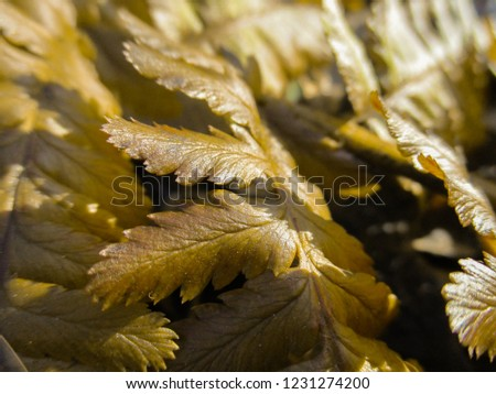 Abstract view of fern plant #1231274200