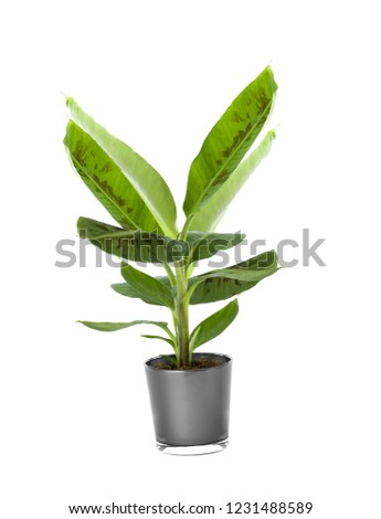 Ornamental Plants isolated over white background #1231488589