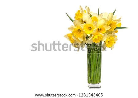 bouquet Yellow narcissus flowers in a glass vase Isolated on white background and space for your text. #1231543405