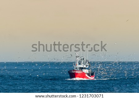 Fishing boat returning with lots of seagulls feeding at the rear of the boat Royalty-Free Stock Photo #1231703071