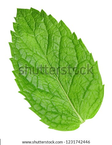 Mint leaves isolated on white. Mint Clipping Path #1231742446