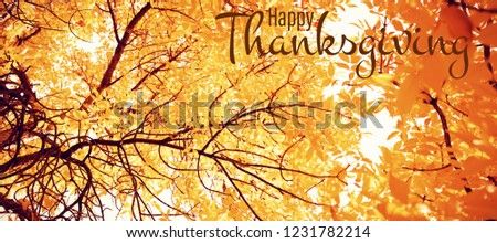 Illustration of happy thanksgiving day text greeting against  view of leaves