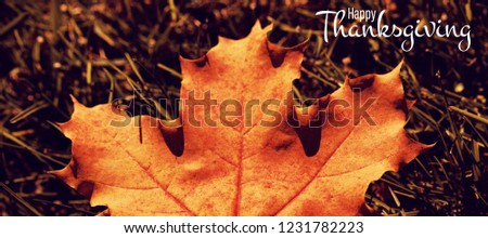 Illustration of happy thanksgiving day text greeting against maple leaf fallen on green grass