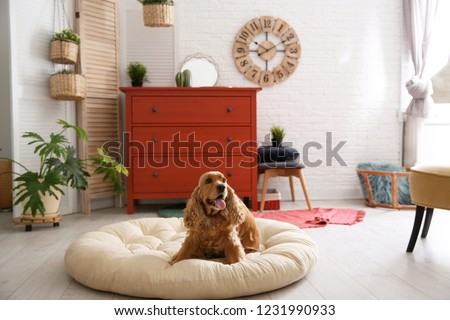 Adorable dog on pet bed in stylish room interior #1231990933